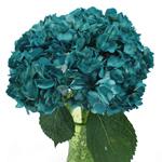 Aquamarine Blue Airbrushed Hydrangea Wholesale Flower in a Vase