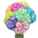 Assorted Enhanced Hydrangea Wholesale Wedding Flower in a Vase