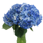 Blue Airbrushed Hydrangea Wholesale Flower In a vase
