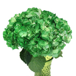 Bright Green Airbrushed Hydrangea Wholesale Flower In a vase