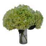 Giant Pale Green Hydrangea Wholesale Flower In a vase