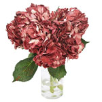 Glitzy Red Airbrushed Hydrangea Wholesale Flower In a vase