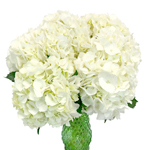 Ivory White Hydrangea Wholesale Flower In a vase