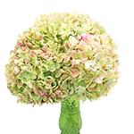 Light Antique Green Hydrangea Wholesale Flower In a vase