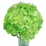 Hydrangea Light Green Airbrushed Wholesale Wedding Flowers in a Vase