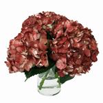Marsala Hydrangea Wholesale Flower In a vase