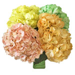 Multicolor Hydrangeas Wholesale Flowers In a vase