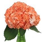 Orange Airbrushed Hydrangea Wholesale Flower In a vase