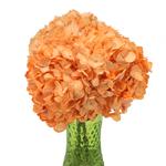 Peach Enhanced Hydrangea Wholesale Flower In a vase