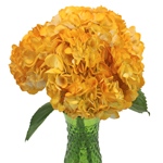 Pineapple Fizz Airbrushed Yellow Hydrangea Flowers in a Vase