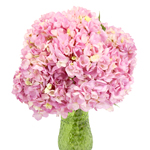 Pink Blossom Hydrangea Wholesale Flower in a Vase