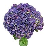 Purple Hydrangea Wholesale Flower In a vase