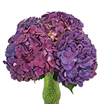 Hydrangea PurpleBerry Wholesale Flower in a Vase