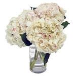 Red Sparkle White Hydrangea Wholesale Flower In a vase