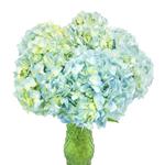 Sea Glass Blue Hydrangea Wholesale Flower in a Vase