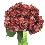 Terra Cotta Airbrushed Hydrangea Wholesale Flower in a Vase