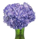 Whimsical Fairytale Enhanced Hydrangea in a Vase
