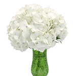 White Hydrangea Flower In a Vase