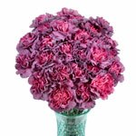 Hypnosis Hot Pink and Purpleberry Carnation Flowers In a vase