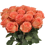 Imagination Coral wholesale roses in a a vase