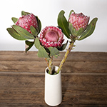 Pink impressive protea flowers for delivery