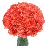 Indiana Dark Orange Sunset Carnation Flowers In a vase