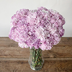 Inory Pink and Purple Carnation Flowers in a Vase