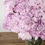 Inory Pink and Purple in a vase Close Up