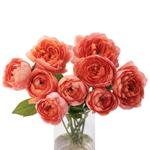Jam Tart Coral Garden Wholesale Roses In a vase