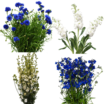 June Combo DIY Flower Kit Bunch