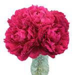 Kansas Magenta Pink Peony in a vase