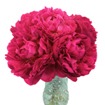 Peonies  for May Delivery