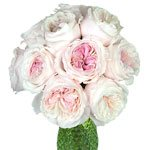 a bundle of light pink roses sold in bulk for wedding bouquets