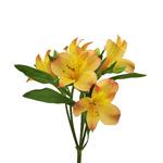 Kiss of Orange alstroemeria Wholesale Flower Stem