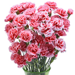 Knock Out Carnation Flowers In a vase