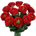 Latin Red Garden Wholesale Roses In a vase