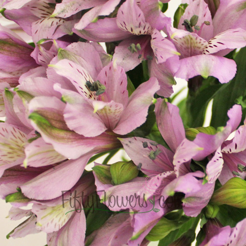 Lavender alstroemeria Wholesale Flower Upclose