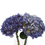 Lavender Blue Hydrangea Stem View