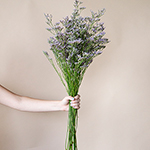 Wholesale Limonium Flowers online