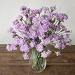 Lavender Mini Carnation Flowers In a vase
