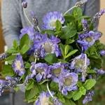 Valentine\'s Day Flower Gift Passion Arrangement
