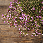 Pinky lavender wax bulk wedding flowers