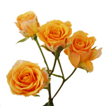 Light Golden Orange Spray Rose Stem
