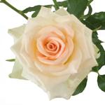 Light Peach Spray Rose Stem