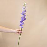White_Delphinium_Flowers