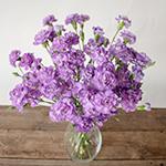 Light Purple Mini Carnation Flowers In a vase