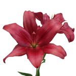 Hot Pink Wedding Lilies