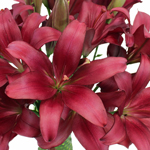 Hot Pink Wedding Lilies