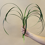 Wholesale greenery lily grass greens small bunch sold near me