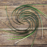 Bulk lily grass greenery sold as wholesale designed